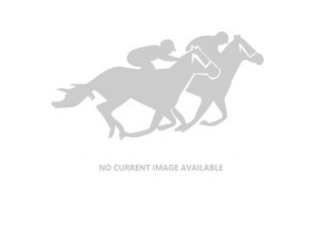 Picture of race horse: Carluca