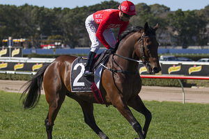 Picture of race horse: Brave Song