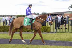 Picture of race horse: Chatelard