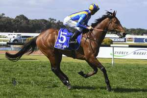 Picture of race horse: Irukandji