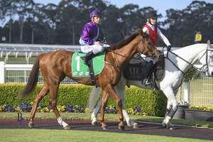 Picture of race horse: Lisdoonvarna