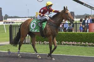 Picture of race horse: Aqua D'ivina