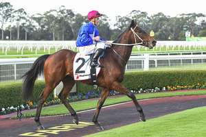 Picture of race horse: Chalmers