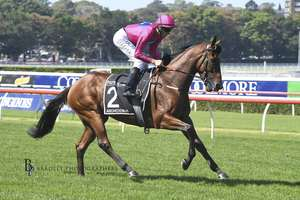 Picture of race horse: Archedemus