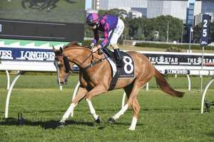 Picture of race horse: White Boots