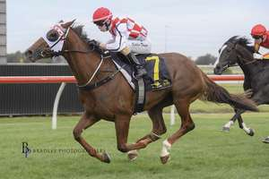 Picture of race horse: Scarlet Dream