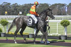 Picture of race horse: St Covet's Spirit