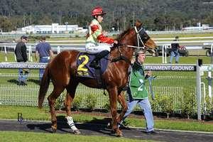 Picture of race horse: No Escape