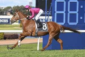 Picture of race horse: Superium