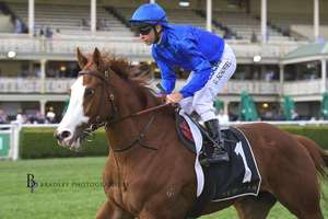 Picture of race horse: Cascadian