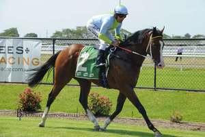 Picture of race horse: Pandano