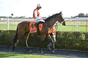 Picture of race horse: Bottega