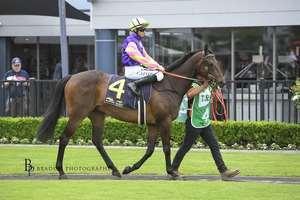 Picture of race horse: Esteem Spirit