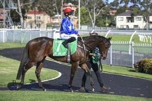 Picture of race horse: Almerheri