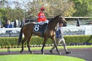 Picture of race horse: In Lighten Me