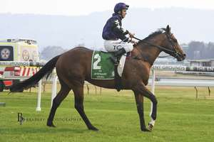 Picture of race horse: Big Parade