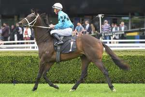 Picture of race horse: Global Quest