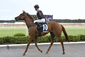 Picture of race horse: Turnstyle