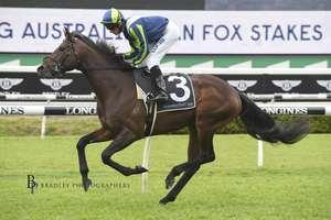 Picture of race horse: Brandenburg