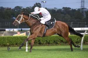 Picture of race horse: Willowheart