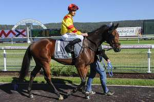 Picture of race horse: Chains Of Honour