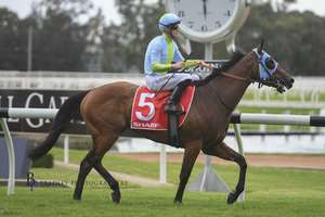 Picture of race horse: Positive Peace