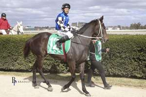 Picture of race horse: Enchanted Heart