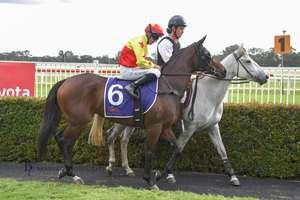 Picture of race horse: California Salto