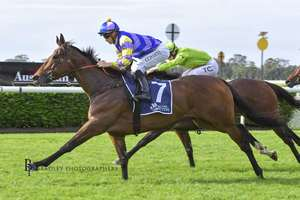 Picture of race horse: Bring the Ransom