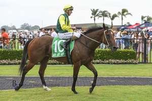 Picture of race horse: Adelong