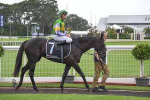 Picture of race horse: Dunbrody Power