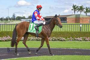 Picture of race horse: Macroura