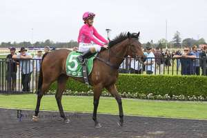 Picture of race horse: Military Magic
