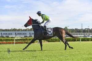 Picture of race horse: Riva Capri