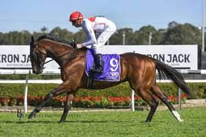 Picture of race horse: Yardstick