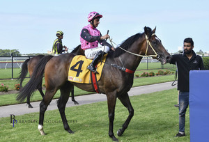 Picture of race horse: Dream Circle