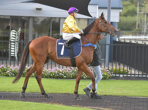 Picture of race horse: Navy Cross