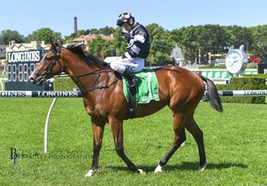 Picture of race horse: Fortune Seeker