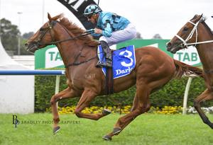 Picture of race horse: Ellsberg