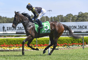 Picture of race horse: Nicci's Fling