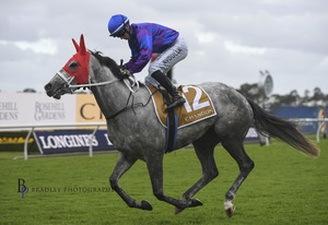 Picture of race horse: Macushla