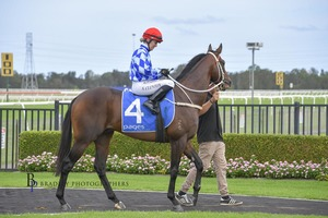Picture of race horse: Darleb