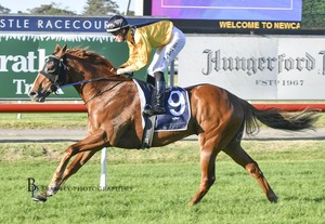 Picture of race horse: Super