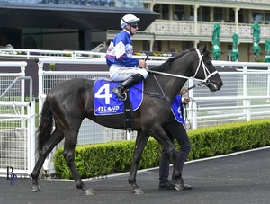 Picture of race horse: Wairere Falls