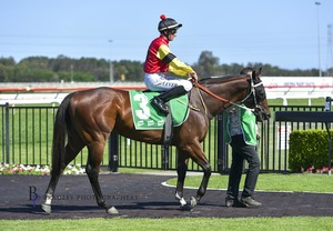 Picture of race horse: Don Luigi