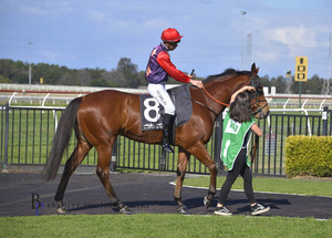 Picture of race horse: First Courrier