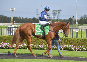 Picture of race horse: Karmazone