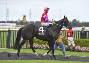 Picture of race horse: Stolen Jade