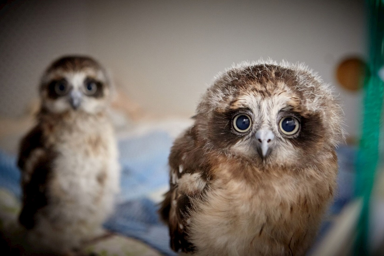 Secure Payment to Wildlife Rescue South Coast (Higher Ground Raptors)