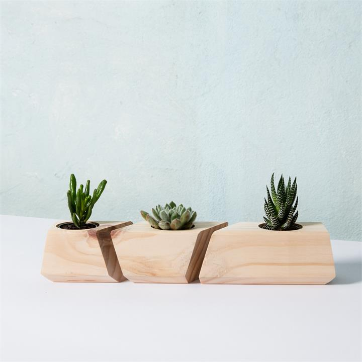 Succulent Planter | The Trio